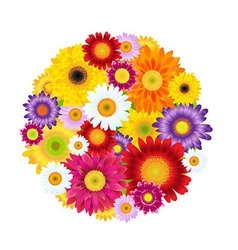 Colorful Gerbers Flowers Ball vector image vector image