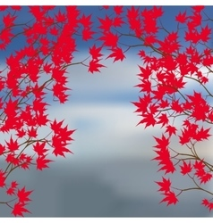 Greeting card of the autumn landscape Red maple vector image