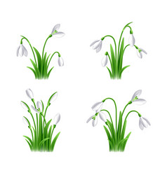 first spring flowers called snowdrop set vector image