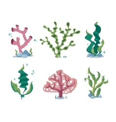 Underwater seaweeds aqua kelp ocean and aquarium vector image