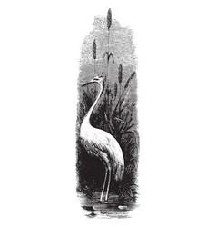 White egret vintage vector