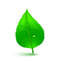 green leaf with drops of water vector image