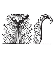 Acanthus decoration is an decoration vector