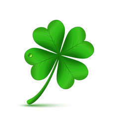 four leafed clover vector image