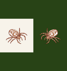Spider on a white and a uniform green background vector