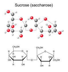 Chemical formula and model of sucrose vector image
