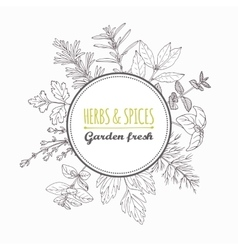 Circle label with hand drawn herbs and spices vector