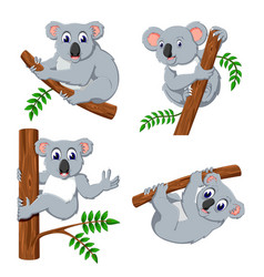 collection of the koala hanging in the tree vector image