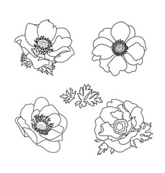 floral summer anemone flowers set hand drawn vector image