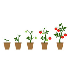 garden background growing vector image