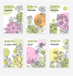Package templates for herbal tea vector