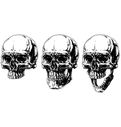 Cool detailed horror human skull graphic set vector image vector image
