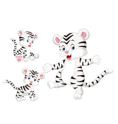 collection of the white tiger vector image