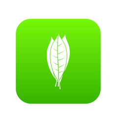 Culinary bay leaves icon digital green vector