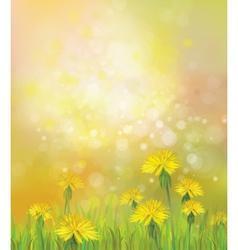 dandelions spring background vector image