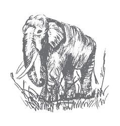 engraving elephant vector image