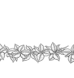 Hand drawn seamless border with foliage of rose vector image