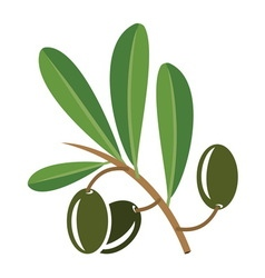 Olive3 vector image