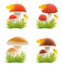set of mushrooms vector illustrations vector image