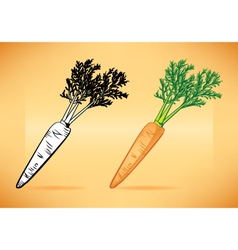Carrot with Top vector image vector image