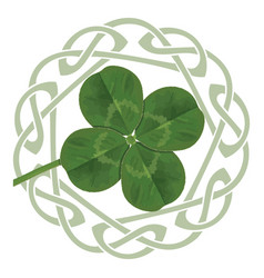 lucky four leaf clover in the celtic style vector image