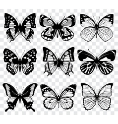 butterflies isolated on transparent vector image vector image