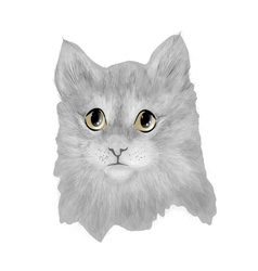 cat baby cute vector image