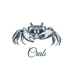 crab sketch hand drawing vector image