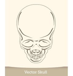 skull isolated on white background vector image vector image