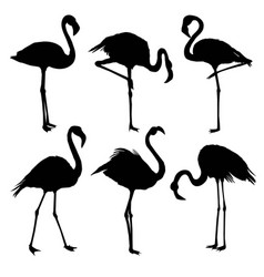 with set of seven flamingo silhouettes isolated vector image vector image
