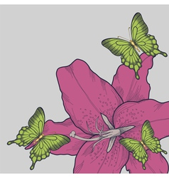 background for a card with butterflies lily vector image