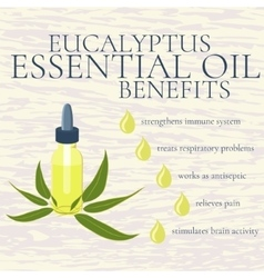 Eucalyptus essential oil benefits infographics vector