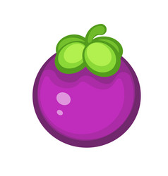 purple mangosteen fruit vector image