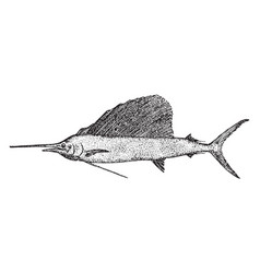 Sailfish vintage vector
