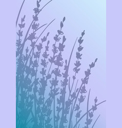 vertical postcard with lavender flowers vector image
