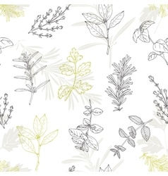 Seamless pattern with hand drawn spicy herbs vector image vector image