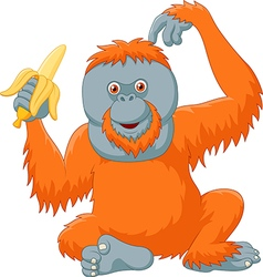Cartoon orangutan eating banana isolated vector