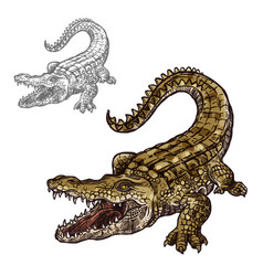 Crocodile alligator isolated sketch icon vector