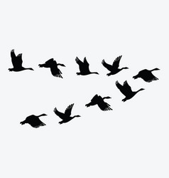 Flock ducks a cartoon flock birds vector
