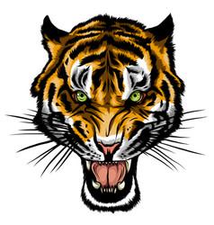 Tiger anger a head vector