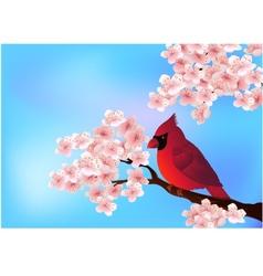 Cardinal bird on the cherry tree vector image vector image