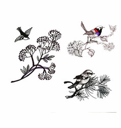 hand drawn painting with colorful birds on vector image vector image