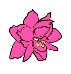 Amaryllis flower vector