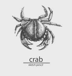 Crab a marine resident sketch style vector