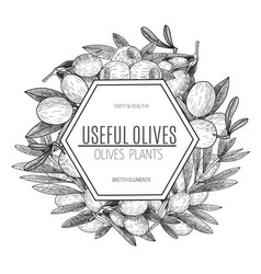 Design of hand drawn olives vintage sketch vector