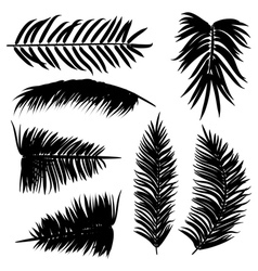Palm leaves silhouette2 vector