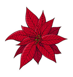 red christmas poinsettia vector image