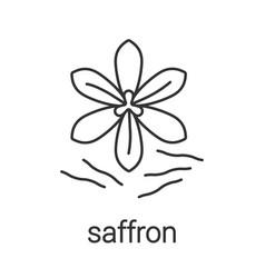 Saffron linear icon vector