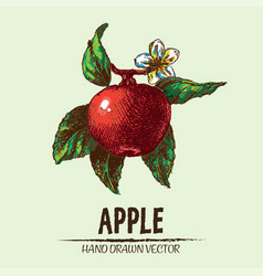 digital detailed apple hand drawn vector image