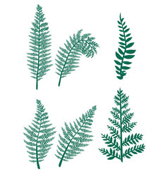 brushes fern on a white background vector image